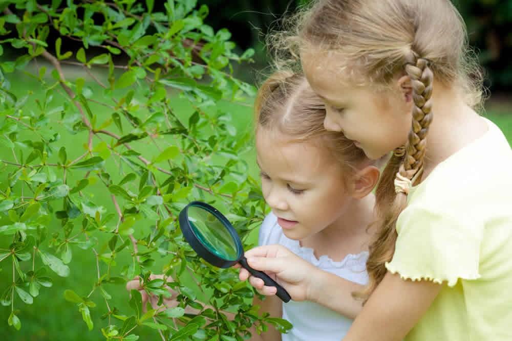 Mädchen untersuchen einen Busch mit einer Lupe.